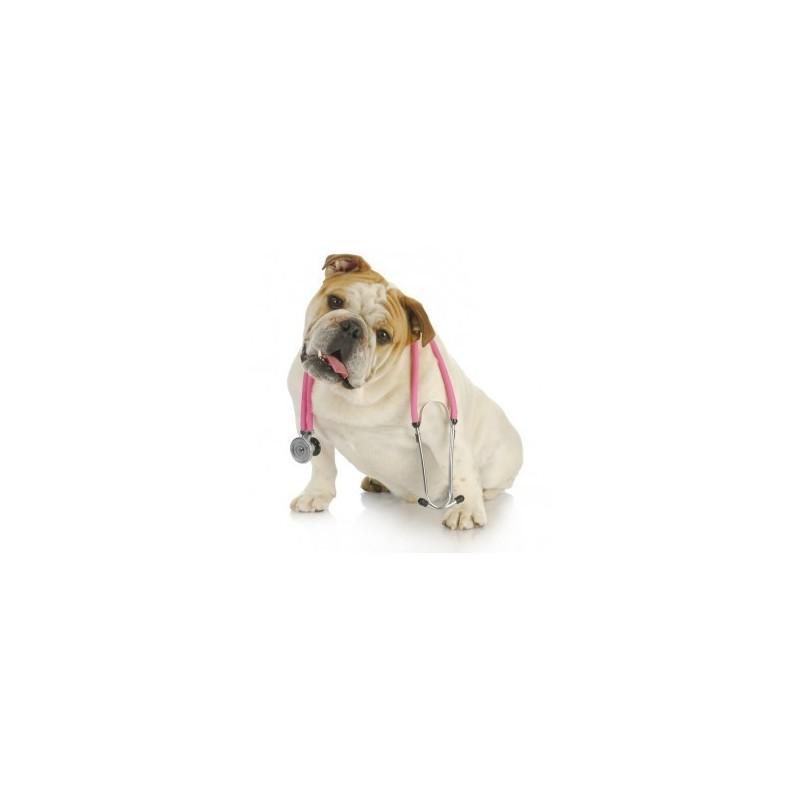 Gold Ferment Dog- Fermenti