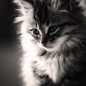17 Febbraio Festa del Gatto ^:^